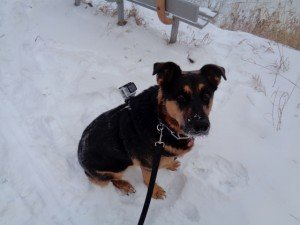 Molly the Adventure Dog with her GoPro