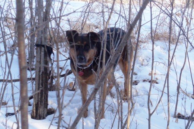 Molly the Adventure Dog