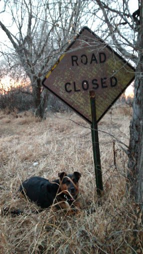 """The Trail Head. Not sure why it says """"Road Closed."""" There is no road."""